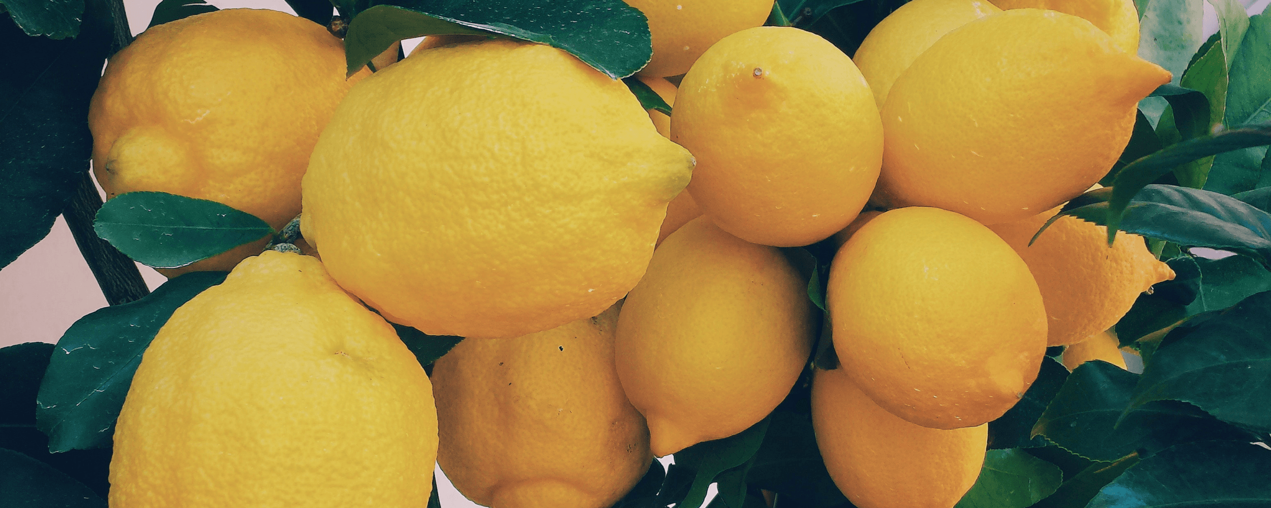 Marketing lemons: Your guide to sweet marketing lemonade