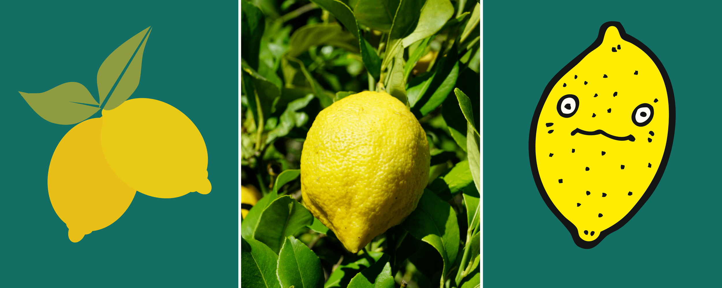 An Etsy email marketing lemon