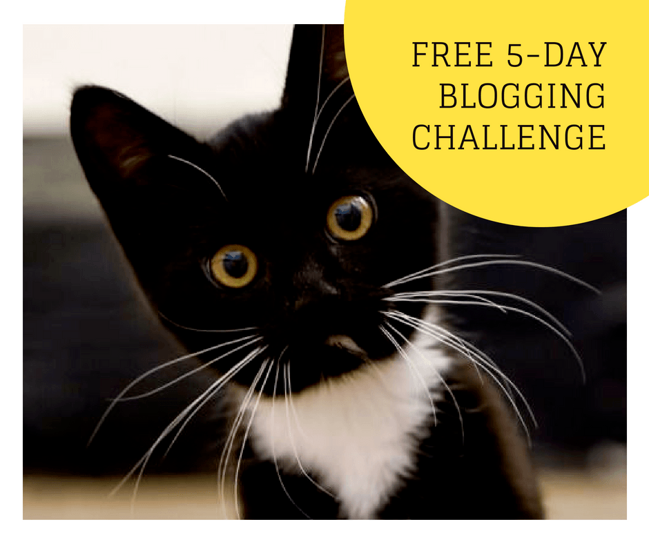 5 day blogging challenge